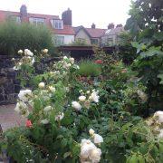 ranelagh garden planting