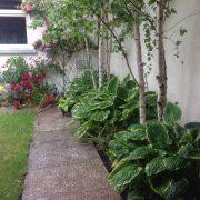 ranelagh garden planting beds