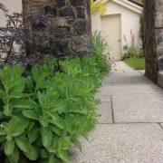 ranelagh garden sedum planting